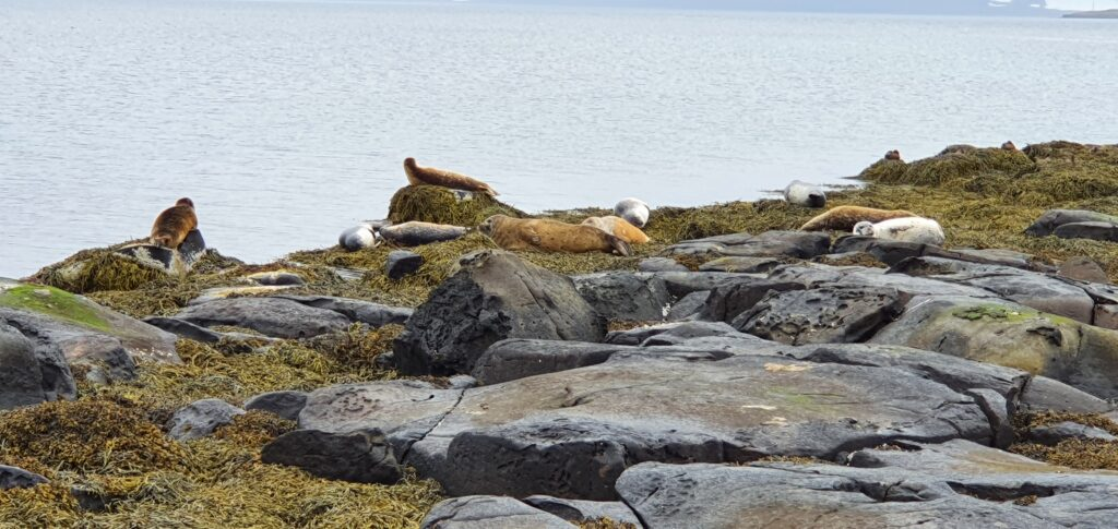 seal lookout at road 61